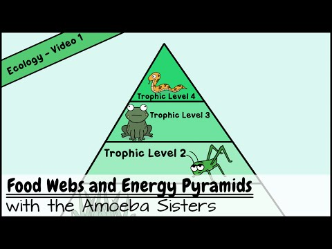 Food Webs and Energy Pyramids: Bedrocks of Biodiversity