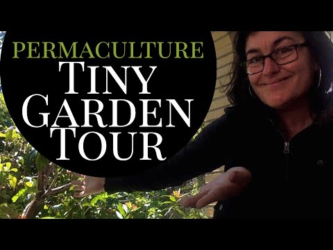 permaculture water welcome and tiny garden tour
