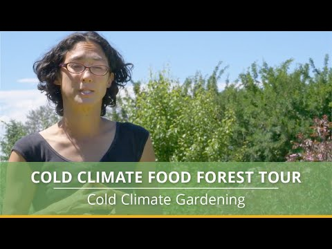 Cold Climate Food Forest Tour