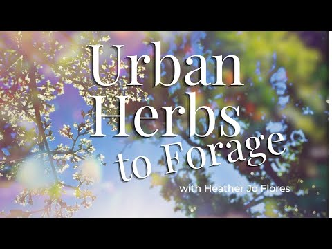 Urban Herbs to Forage in the City! Eat the Weeds!