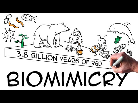 Biomimicry: definition & examples (explained with drawings)