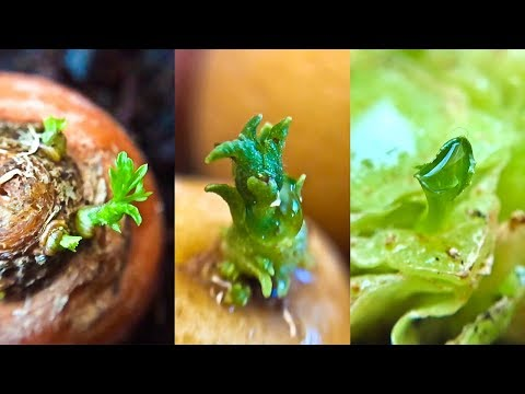 14 Store Bought Vegetables & Herbs You Can Regrow