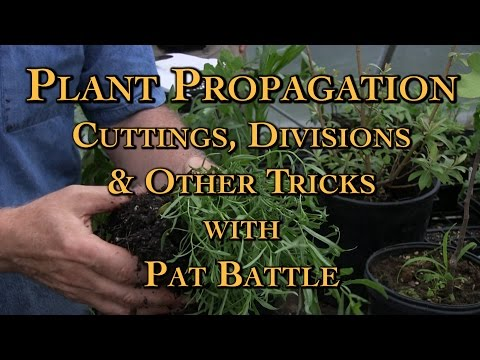 Plant Propagation Cuttings, Divisions & Other Tricks with Pat Battle