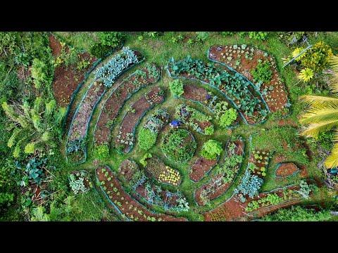 Mandala Market Garden: Growing Year-Round Veggies & Fruits!