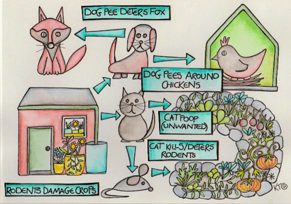 pets and chickens in a permaculture system