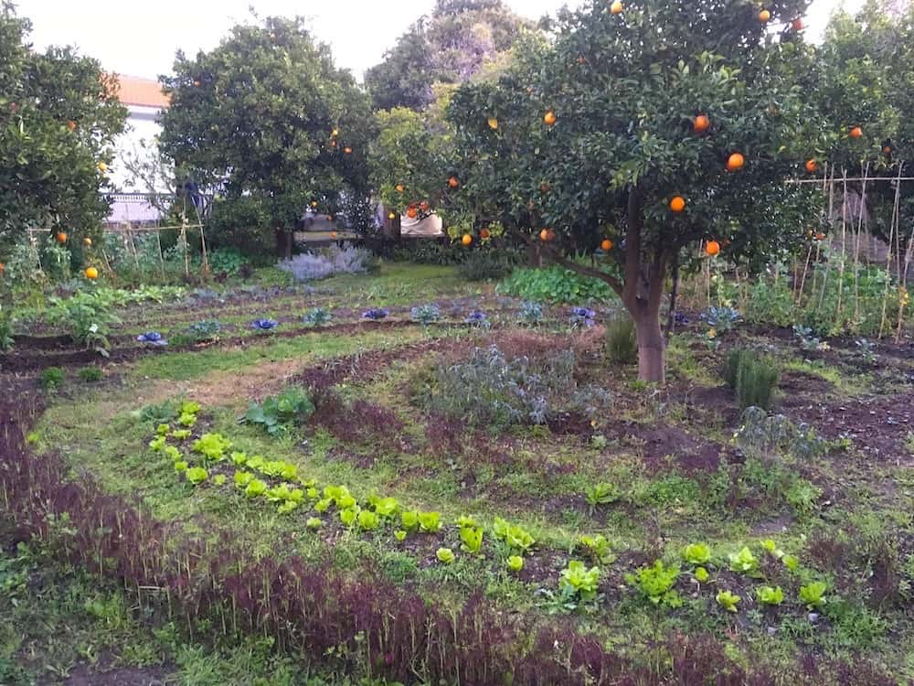 mandala garden permaculture food forest