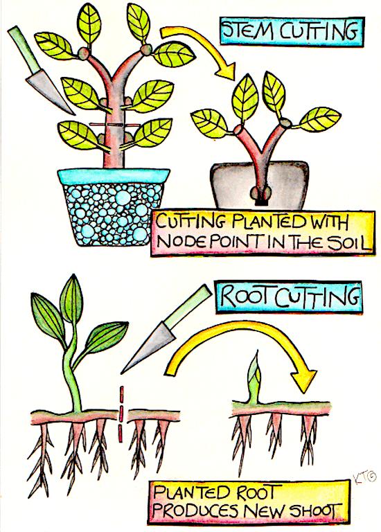 plant propagation infographic