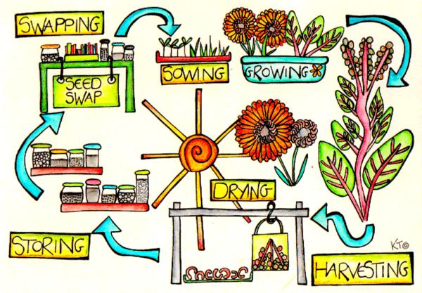 seed saving and stewardship