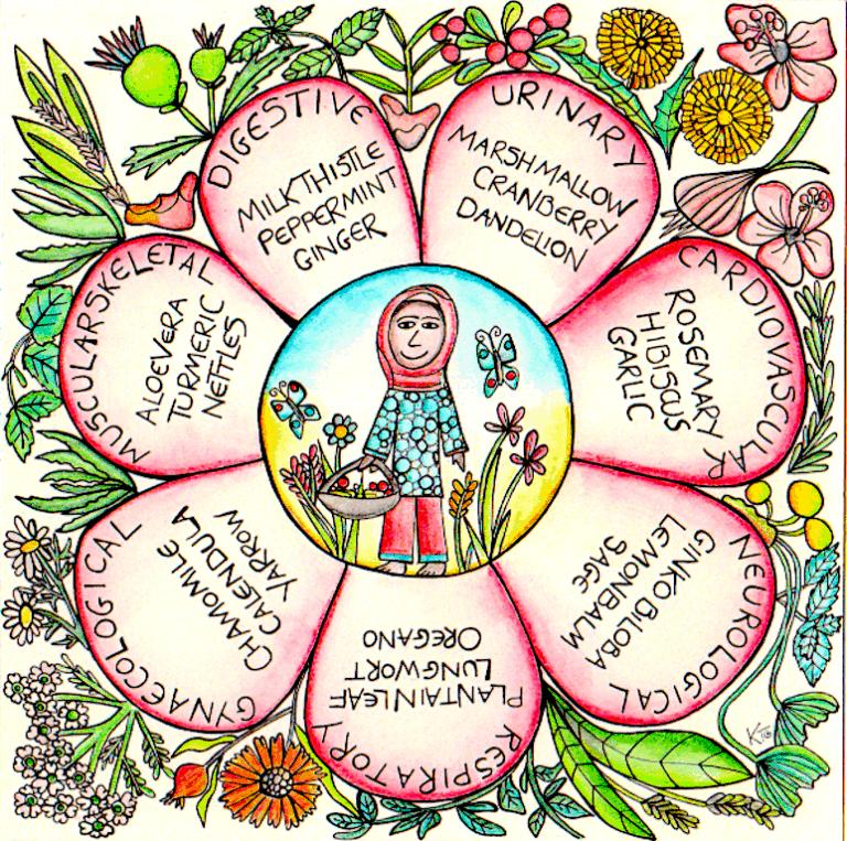 Medicine garden infographic