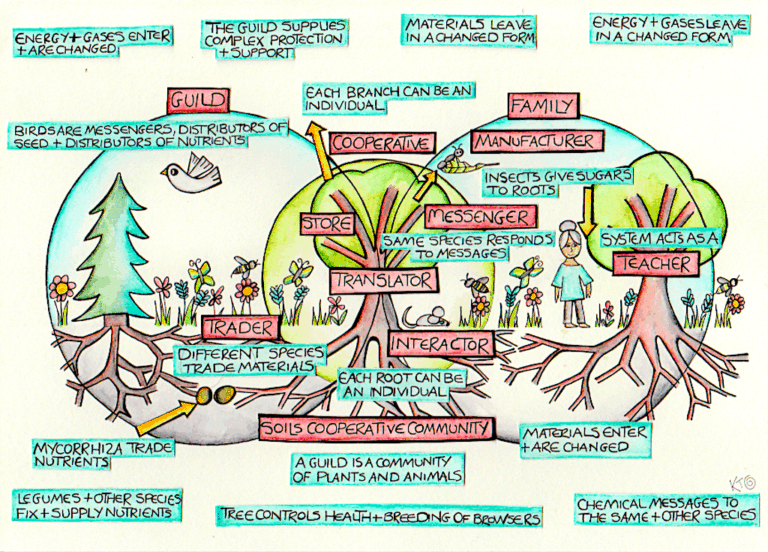tree crops in a permaculture paradise
