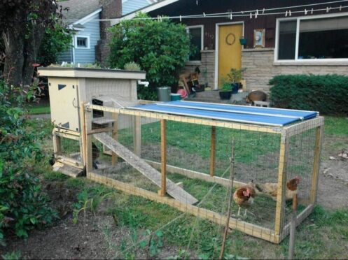 backyard-chicken-coop-with-green-roof_1