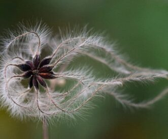 seed frond spiral