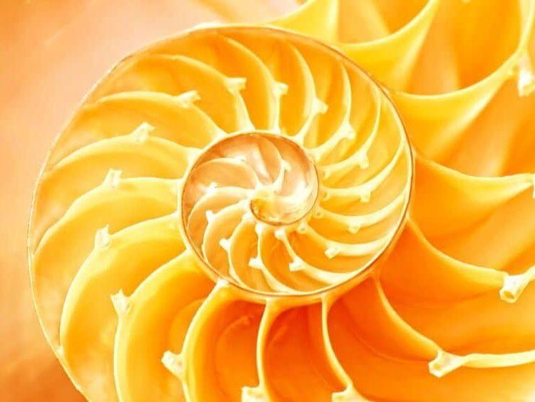 nautilus spiral golden ratio