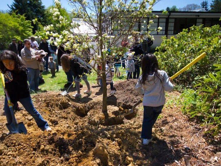 community tree planting with children