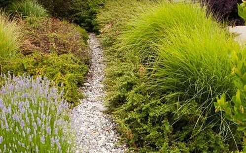 herb beds with stone path