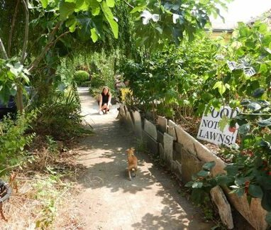 food not lawns in portland urban vegetable garden with dog