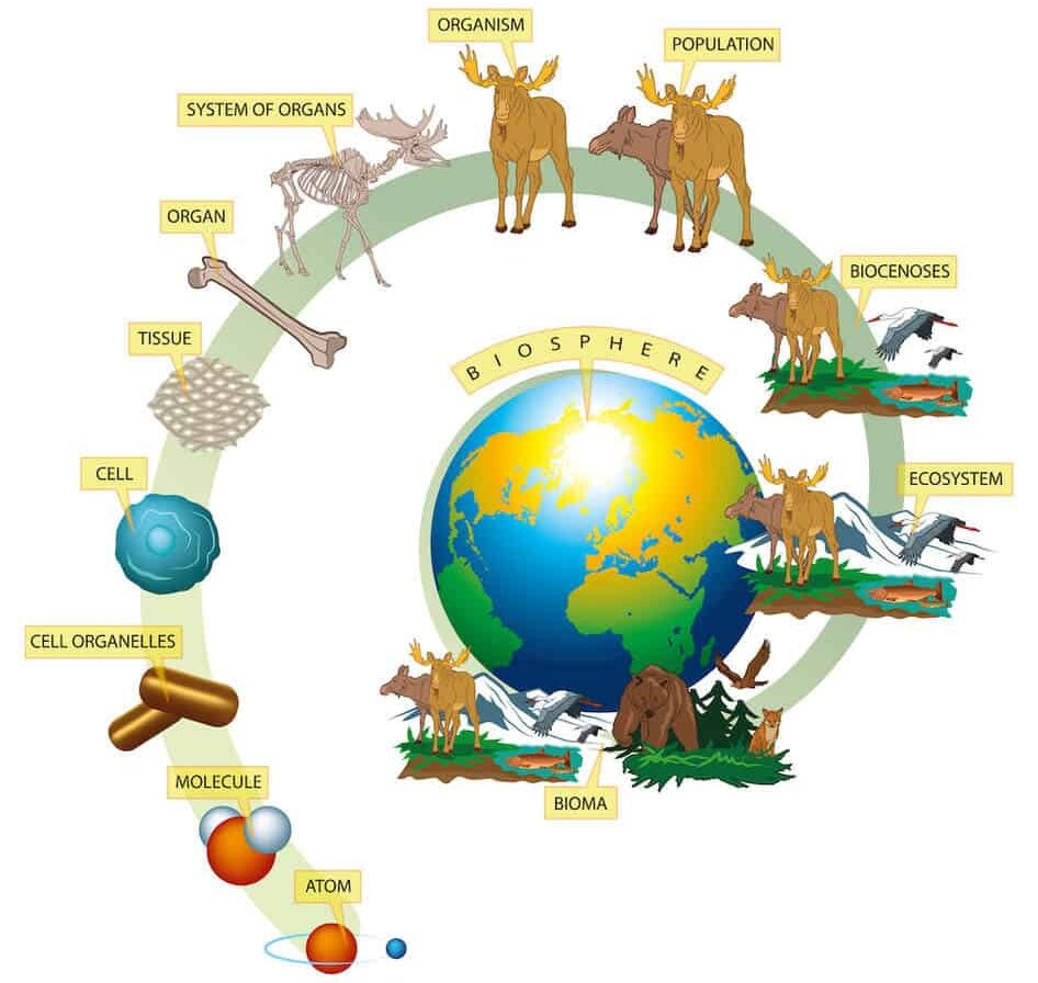 ecosystems from atom to biosphere