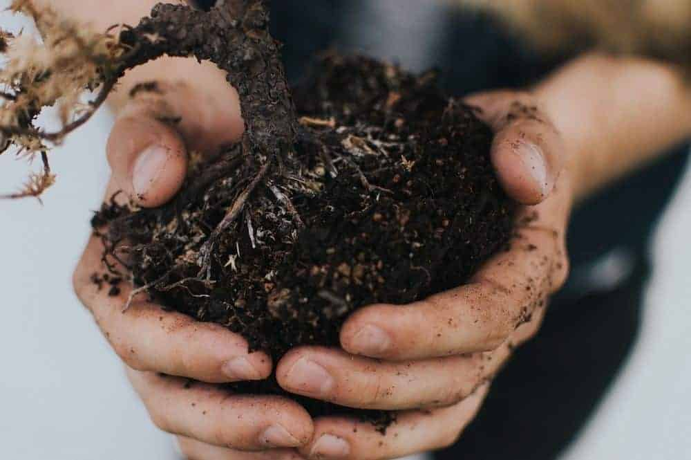 hand full of organic compost