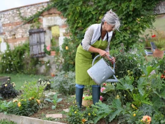 senior woman watering cottage garden with watering can