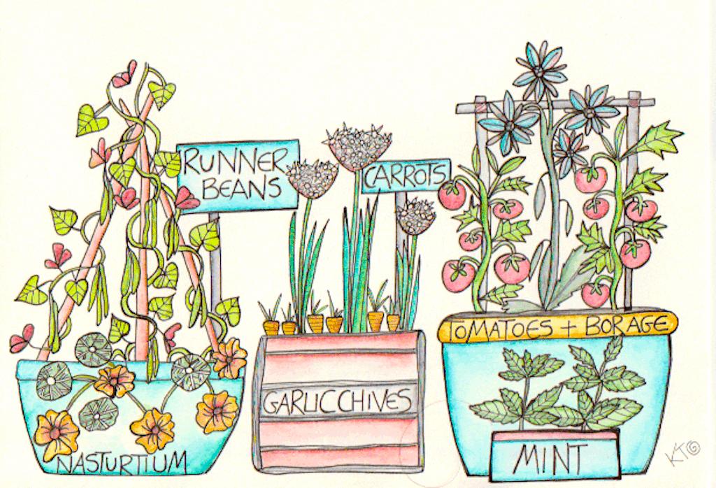 kitchen garden in containers