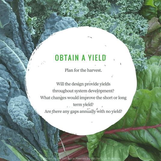 kale and chard plants showing designing for obtaining optimum yields
