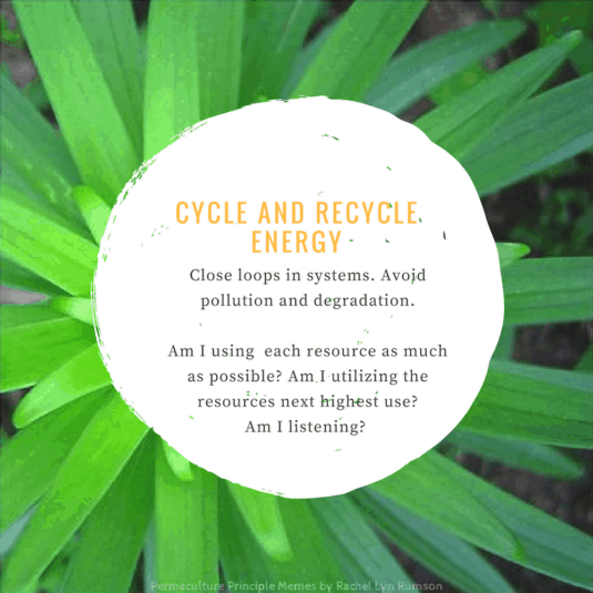 green petals showing cyclic energy design