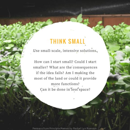 micro greens starting things small