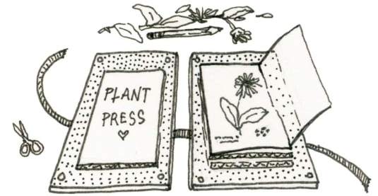 plant press illustration by Jackie Holmstrom