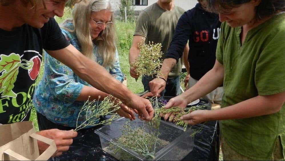 saving seeds workshop in Montana