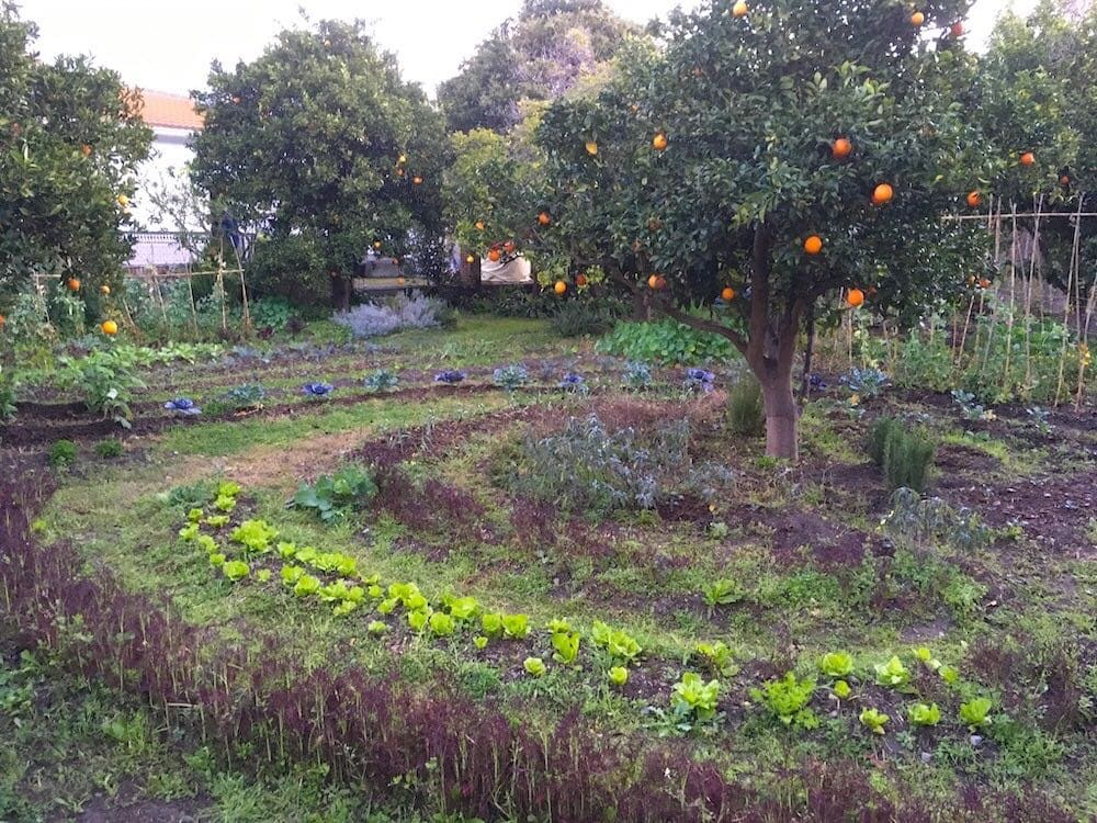 front yard food forest