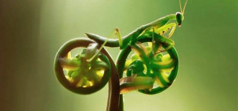 spiral pattern fern with praying mantis