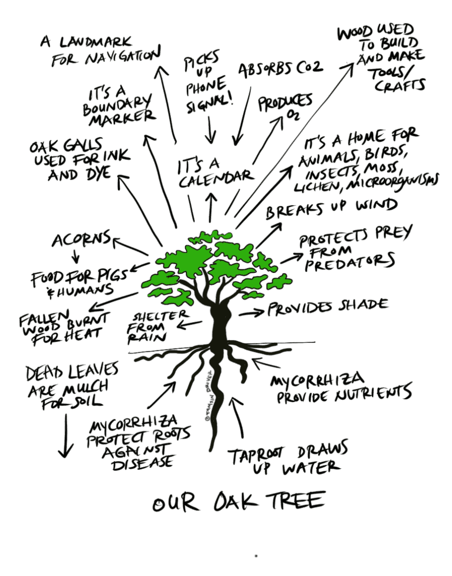 oak tree ecosystem permaculture observation exercise drawing