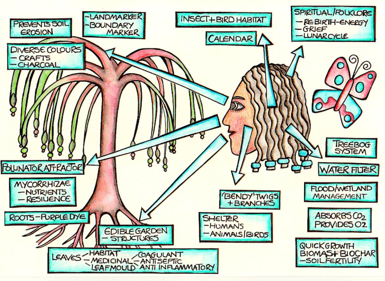 Observation illustration by Kt Shepherd