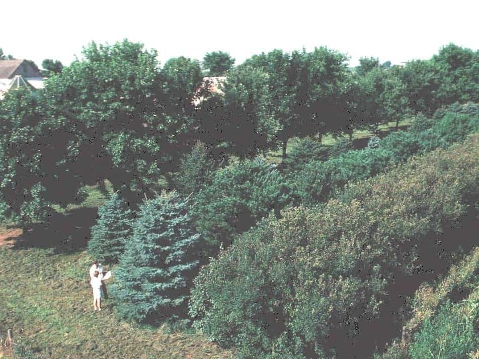 hedges and windbreaks of deciduous trees and conifers