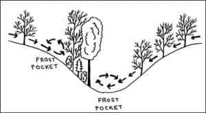 design of use of frost pockets to protect trees