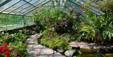 microclimate in a greenhouse with tropical plants, flowers and pools