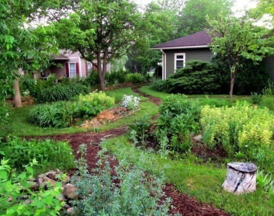 transformed urban garden with vegetable and herb beds