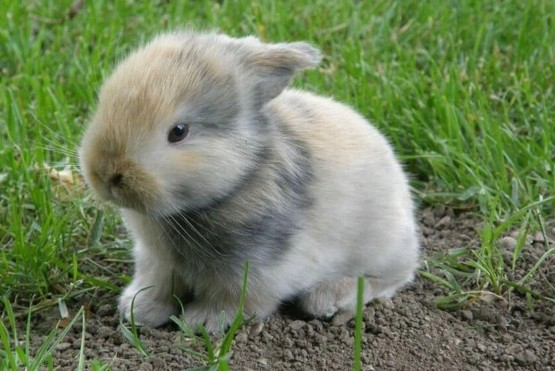 young fluffy baby rabbit in grass