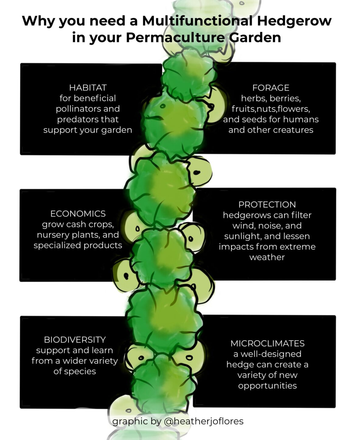Why you need a multifunctional permaculture hedgerow infographic by Heather Jo Flores