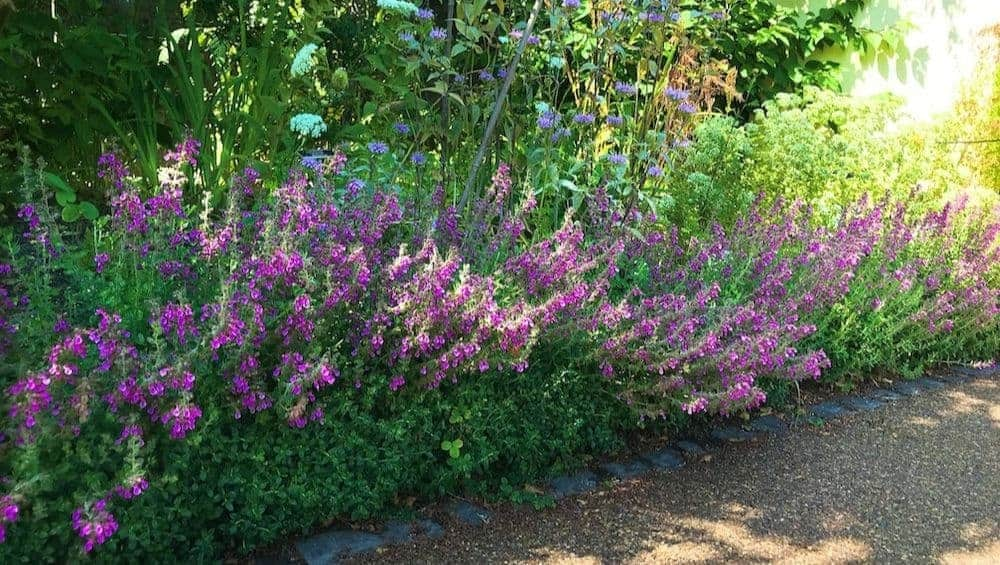 flowers, crops and trees in permaculture system