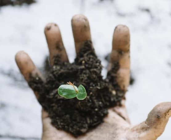 man hands transplanting plant.