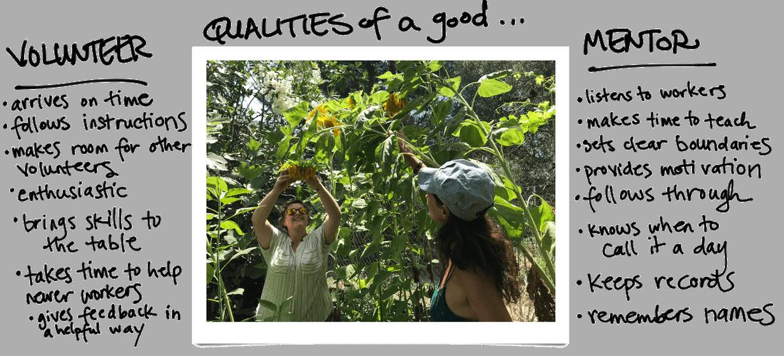 qualities of good volunteers and mentors