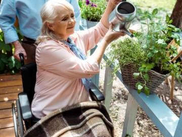 wheelchair gardener elder woman
