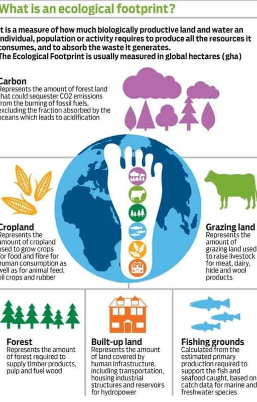 what is an ecological footprint infographic