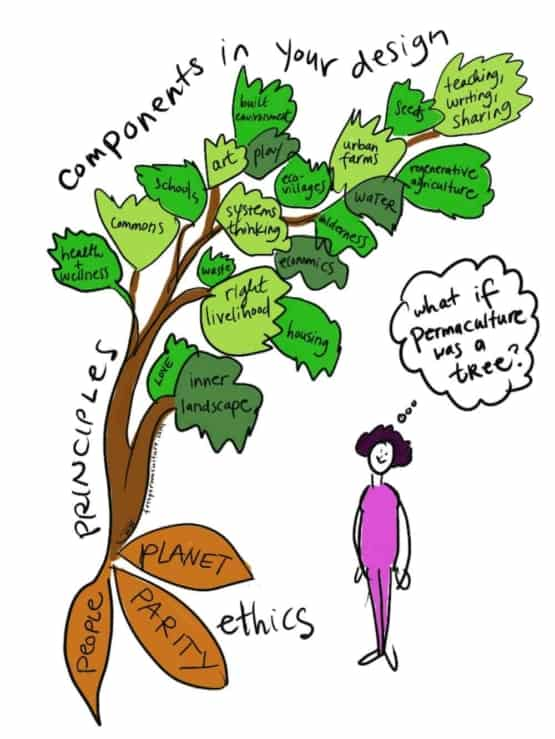 if permaculture was a tree illustration by Heather Jo Flores