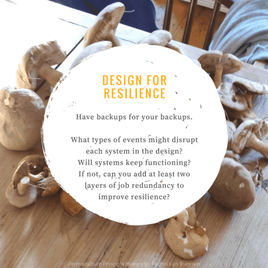 foraged mushrooms as design for resilience